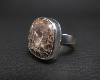 Turritella Agate Ring