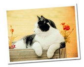 Cat Note Card, Tuxedo Cat Greeting Card