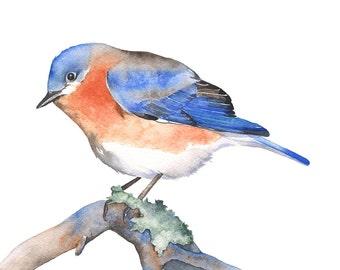 Bluebird original watercolor painting, Original Bluebird watercolour painting