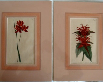 2 Antique Hand Colored Matted Floral Prints with Original Text