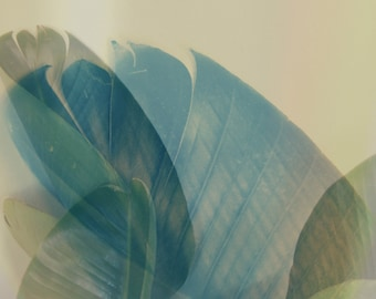 Mid Century Style California Palms, Jungalow, Botanical Photography, Minimalist Home Decor, Palm Leaves, Pastel Modern, Green Leaf, Abstract