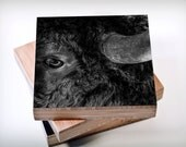 Eye of the Bison// Black and White, Buffalo print, Nature Photography, Nature Art Print, Great Plains