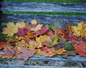 REAL MAPLE LEAVES. Preserved Maple Leaves, Fall Decor, Wedding Decoration. Maple Leaf Table, Aisle Decor