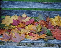 REAL MAPLE LEAVES. Preserved Maple Leaves, Fall Decor, Wedding Decoration.,