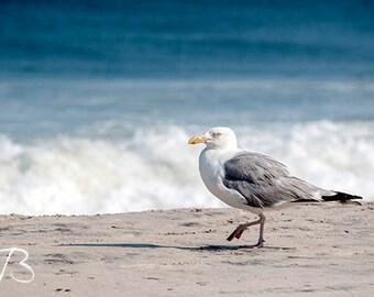 Seagull Ocean New Jersey Shore Photo Digital Download