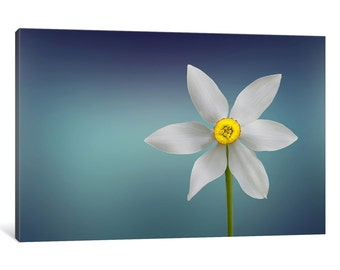 iCanvas Flower Of Paradise Gallery Wrapped Canvas Art Print by Bess Hamiti