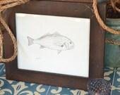 Fish sketch, spot fin croaker,original artwork