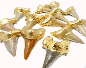 Real Large Shark Tooth Double Bail Pendant Dipped In 24k Electroplated Gold AS-IS -(S65B6-02)