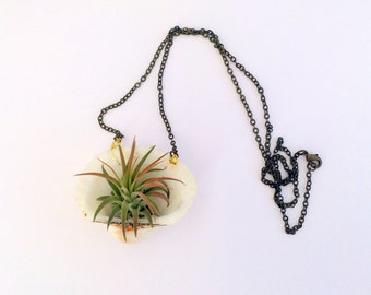 Air Plant Necklace with Iona