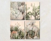 Cactus Photography Set of Four Prints, 4 Southwest Photographs, Cacti Artwork Collection, Blush and Green Wall Decor, Vertical Nature Photos