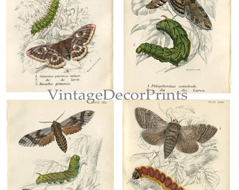 Butterfly and Moth Prints. 4 Individual Original Antique Entomology Prints Date 1886 From Lloyds Natural History Decorative 1886 Antique.