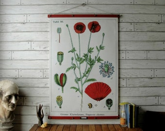 Poppy Botanical Chart / Vintage Pull Down Reproduction / Canvas Fabric or Paper Print / Oak Wood Hangers and Brass Hardware / Organic Finish