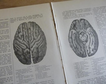 7 Antique Anatomy of the Skull Pages French Circa 1920 Paper Book Illustrations Lot BA1
