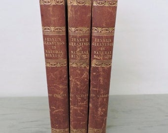 Antique Leather-Bound Natural History Books - Gleanings In Natural History - 3 Volumes - 1830's - Book Set