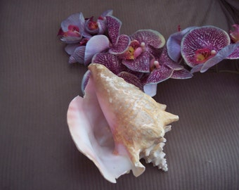 """Large Conch shell size is 8"""", 4"""", 6"""""""