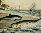 1886 Antique large size lithograph of MARINE MAMMALS: NARWHAL, Dolphin. 129 years old gorgeous print.