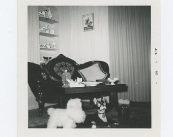 Vintage Snapshot Photo: Three Toy Dogs, 1960 (69505)