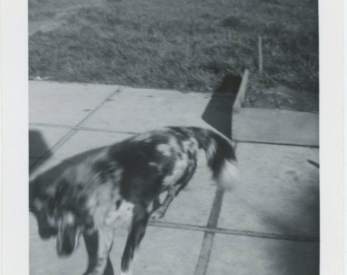 Blurred Dog Abstract, 1950s Vintage Snapshot Photo [65458]