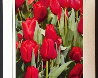 Red Tulips Greeting/Notecard