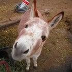 DonkeyFarm