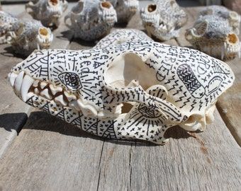 Crushed in spirit on a coyote skull