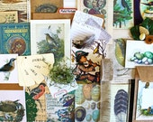 Observing Nature*Vintage Inspired Bird and Egg Inspiration Kit*Scrapbook, Collage, Junk Journal Supplies