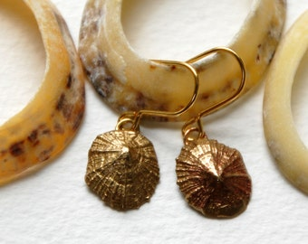 Small Limpet Drop Earrings