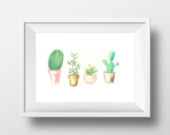 Cacti Still Life