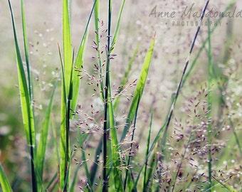 "12"" x 9"" Download,Shetland,Scalloway,Grass,Landscape,Field Of Flowers,Wild Flowers,Wild Flower Image,Wild Flower Decor,Flower Field,Grasses."