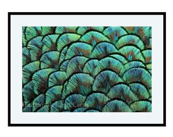 Peacock Wall Art, Blue Green Feather Art Print, Peacock Wall Decor, 8x10 Print, Abstract Photography, Modern Fine Art Photography
