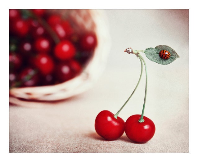 Photography On Wood Cherry Fine Art Photography Cherry Kitchen Wood Wall Decor Still Life Creative Photography