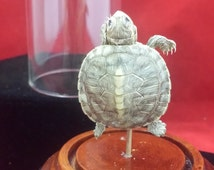 SALE!  Taxidermy Baby Mississippi Map Turtle glass dome display-snake dragonfly fish