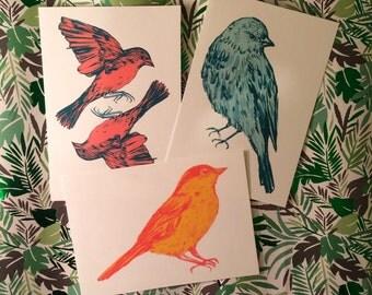 Set of Three: Brightly Coloured Birds