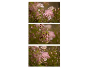Flower Photo Set, Nature Fine Art Photography, Nature Wall Art, Pink Flowers Print, Dreamy Photo, Discount Photos, Cute Photo Gift