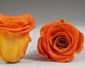 "Preserved Natural lovely Roses, Dried Roses, Rose Bouquet, Dried Flower Bouquet, 1"" inch Preserved Roses, Violet Preserved Rose"