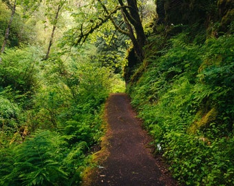 Trail in a forest, in the Columbia River Gorge, Oregon. | Photo Print, Stretched Canvas, or Metal Print.
