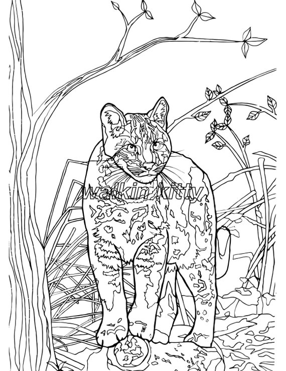wild cat coloring pages - photo#29
