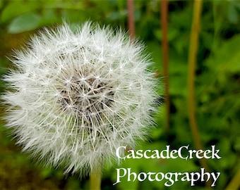 Make a Wish Cascade Creek Photography May 2016