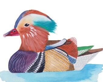 Donald the Mandarin Duck