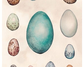 A4 Art Print. Watercolour Eggs Artwork. Scientific Eggs Study in Watercolour. Eggs of Australian Birds