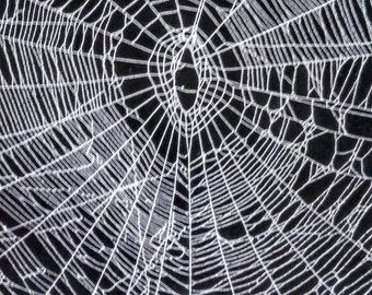Real Spider Web.METALLIC SILVER on Black Poster Board.Ready to be Framed.
