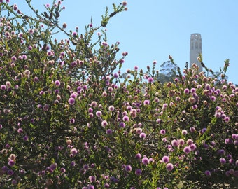 San Francisco Photography, Cityscape Art Print, Coit Tower Photo,  California Photo, Travel prints  - In bloom