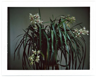 Orchids, Polaroid Photography, #691