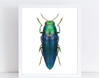 INSTANT DOWNLOAD | Metallic Beetle Wall Art | Insect Printable Art | Nature Wall Art | Insect Art Print | Nursery Art Print | Home Decor |