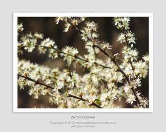 Nature Photography, Blossom Art, Cherry Blossom Photo, Woodland, Dreamy Blossom, Natures Confetti, White, Wall Art, Forest, Trees, Spring
