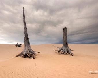 Deadwood on the dunes