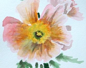 Peach Poppy   Original Watercolor Painting