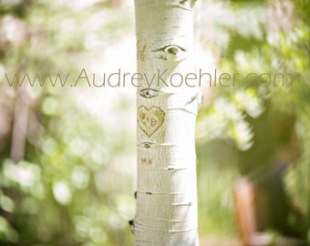 Aspen love - Fine Art Print