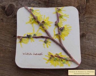 Handpainted Witch Hazel Tile
