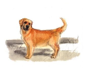 Golden Retriever Dog Art Vintage Style Print